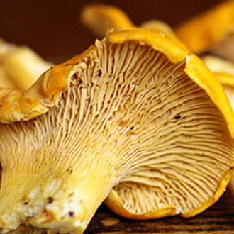 Tips, tricks and facts | Australian Mushrooms